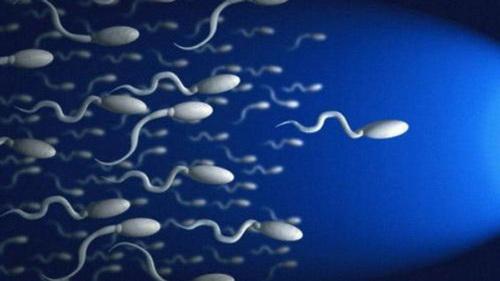 Вырастить здоровые сперматозоиды? Легко!