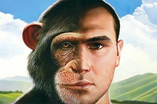 Почему у мужчины мозг большого размера и мягкий член?