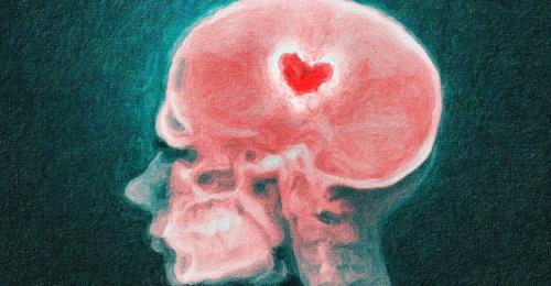 Киссептин – Виагра для мозга.